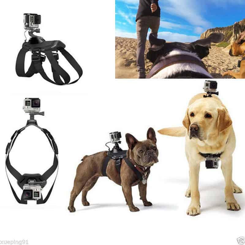 GoPro Hund, GoPro Geschirr Hund, bester Preis, Halterung Hund Kamera, Gadgets, Gadgetwelt, zollfrei PayPal China