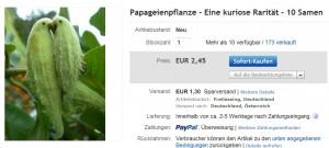 Samen Papageienpflanze günstig selten
