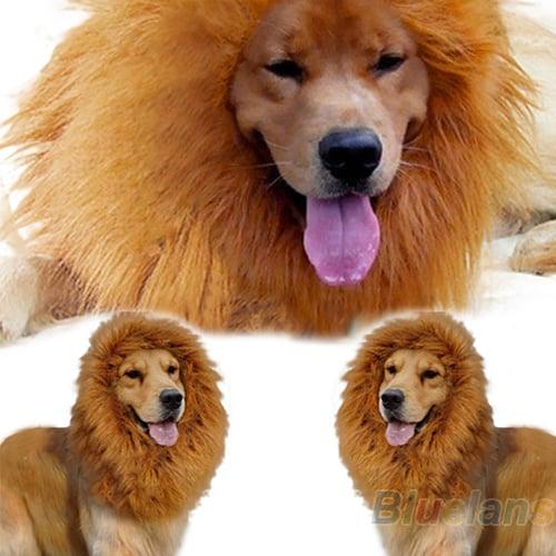 Mein Hund Ist Ein Löwe Mit Der Mähne Ab 212 Euro Gratis Versand