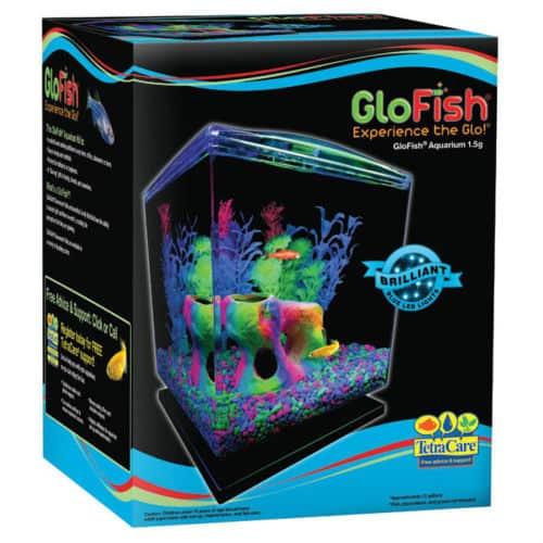 GloFish kaufen? Genetisch veränderte Fische die leuchten?