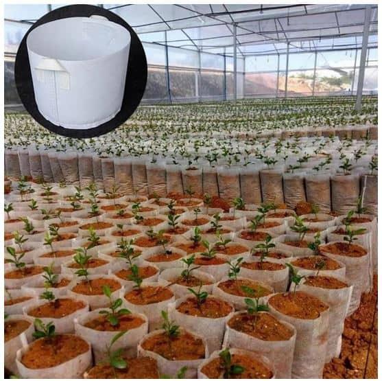 Pflanzsäcke / Planzbeutel anstatt Töpfen? Mehr Ertrag bei der nächsten Ernte?