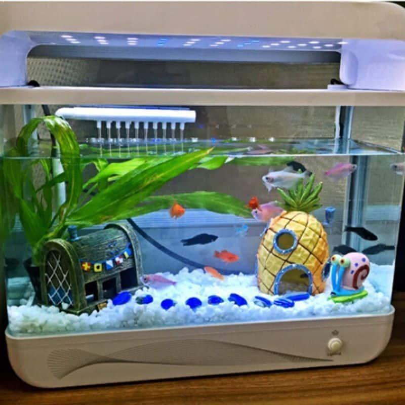 wer wohnt in ner ananas ganz tief im aquarium. Black Bedroom Furniture Sets. Home Design Ideas