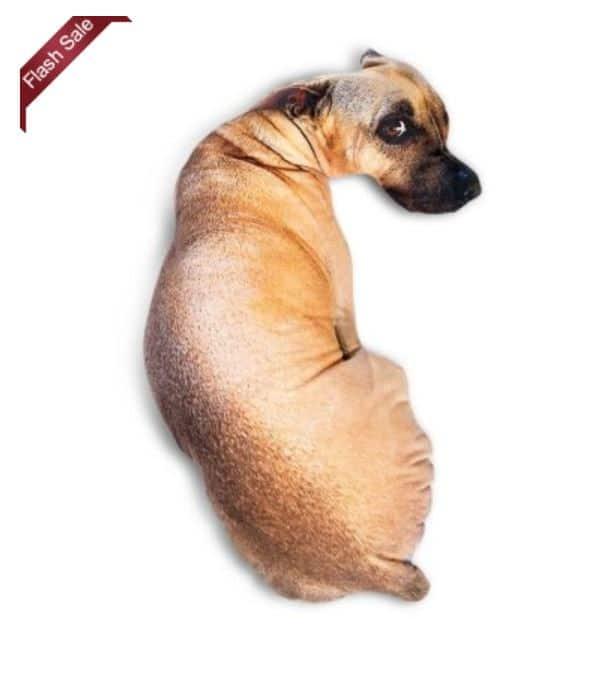 flash der hund